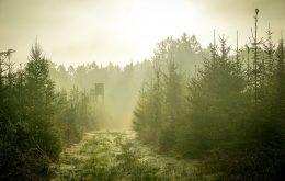 Jagttårn i en skov med lav sol